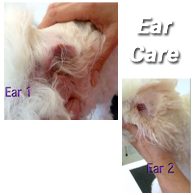 Ear Cleansing